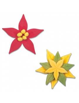 Lot de 3 Emportes-pièces avec éjecteurs forme Fruit d'étoile