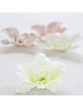 Set d'emporte pièces Inox pour Orchidée